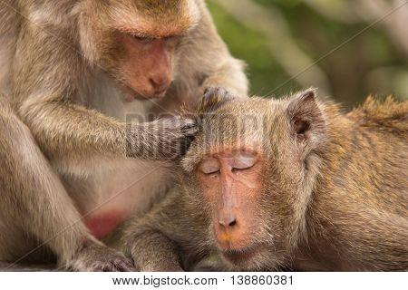 Monkeys at Phetchaburi Thailand, wild animal and primate species