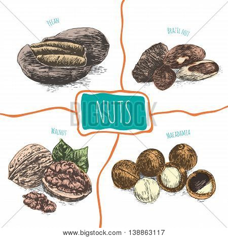 Vector illustration colorful set with nuts. Different sort of nuts on white background