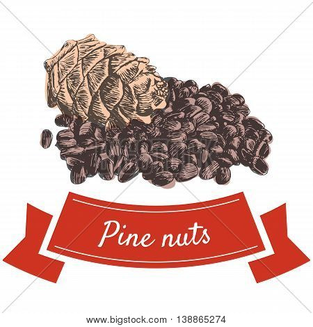 Vector colorful illustration of pine nuts. Illustrative sorts of nuts