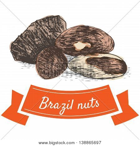 Vector colorful illustration of brazil nuts. Illustrative sorts of nuts