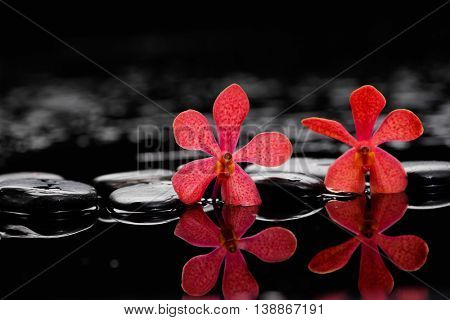 Red two orchid on wet black stones