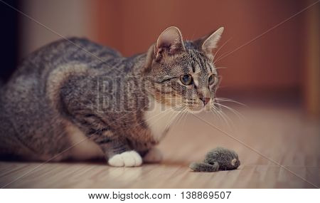 The striped cat with white paws plays on a floor with a toy mouse.