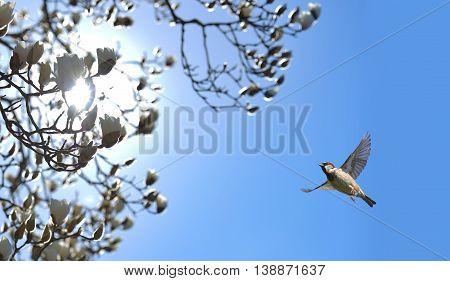 Bird in flight against bright blue spring background