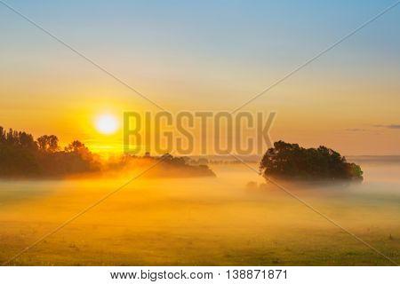 Landscape Fog In Oak Grove At Dawn In The Autumn