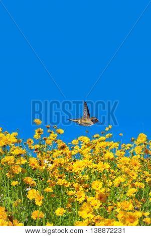 Hummingbird flying above bright summer field vertical image