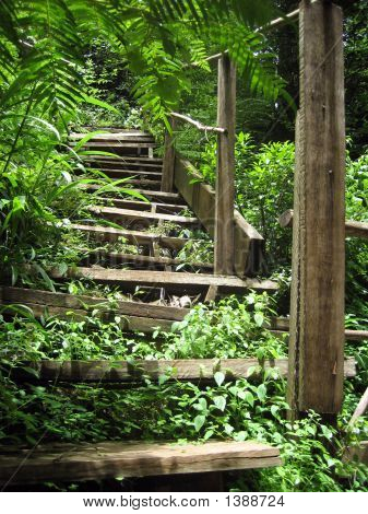 Stairway Up In The Woods