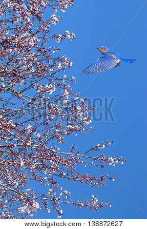 Tree in full white blossom and bird on sunny day in spring vertical image