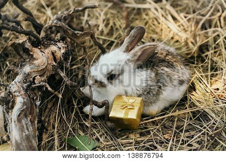 Cute little bunny rabbit with gift box with golden wrapper ribbon bow and exposed roots on hay on natural background