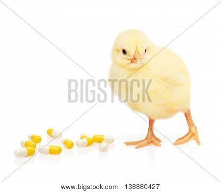 Small yellow chicken near pill from pile of yellow and white capsules isolated on white background