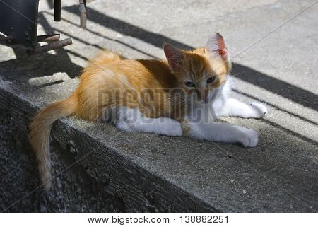 Lonely red kitten lying on the ground.