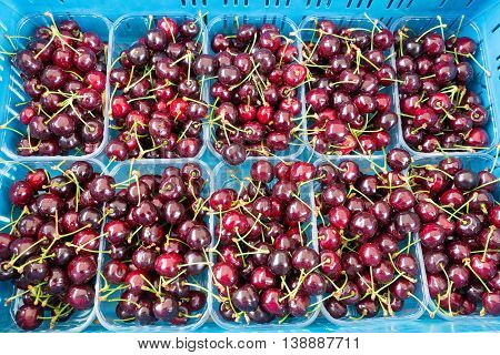 Fruit trays with sweet red cherries in blue crate