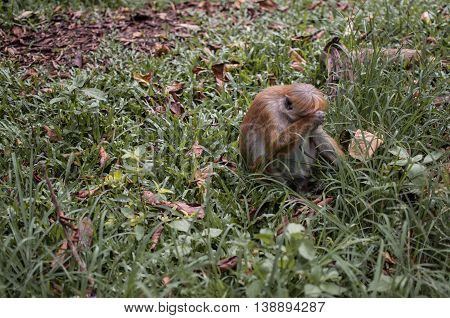 Sad monkey sitting on the grass and cries