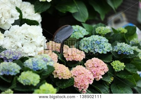 Colorful blooming flowers in a shop