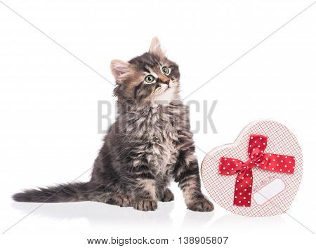 Cute siberian kitten with gift box isolated over white background