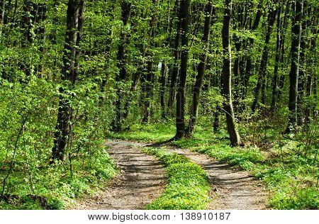 Nature Green Wood Sunlight Backgrounds