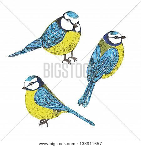 Flock of blue tits isolated over white background. set of birds. vector illustration