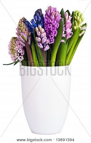 Blooming Hyacinths In A Vase