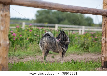 Dog standing outdoors at hot summer day