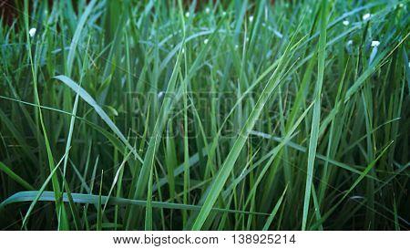 Emerald green grass,  fresh grass,  green grass