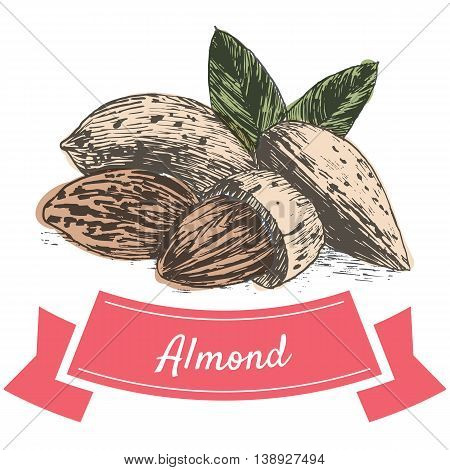 Vector colorful illustration of almond nuts. Illustrative sorts of nuts