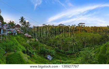 Rice fields Jatiluwih on Bali island Indonesia - travel and nature background