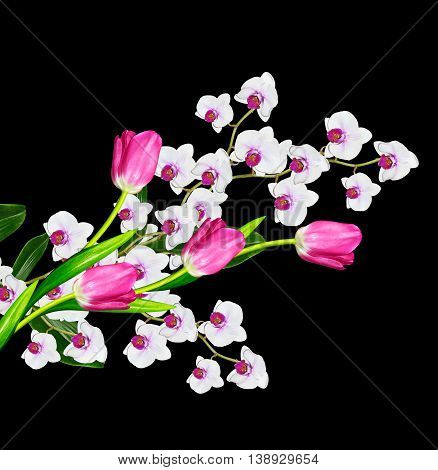Delicate orchid flowers isolated on black background. Beautiful flower Orchid. tulip