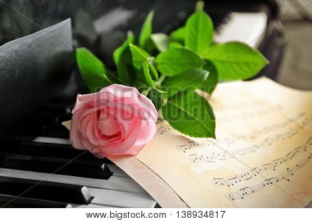 Musical notes and pink rose on piano keys, close up
