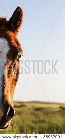 portrait horse on a background of field with grass