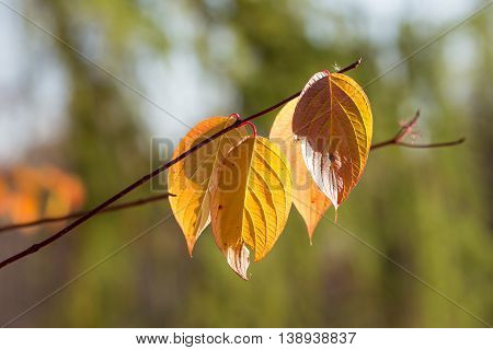branch with autumn leaves in the foreground