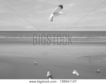 Seagull Bird Animal