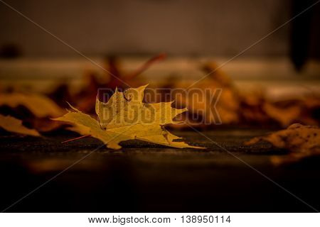 Yellow fall leaf in foreground with blurred scattered leaves in the background