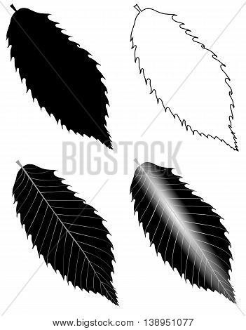 chestnut , vector , isolated chestnut leaf