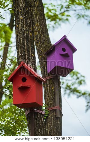 Two colored birdhouses on tree trunks. Red and purple nesting boxes. Photo with limited depth of field (focus on foreground).