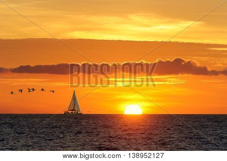 Sailboat birds is a sailboat moving along the water with large seabirds following as the sun is going down on the ocean horizon.