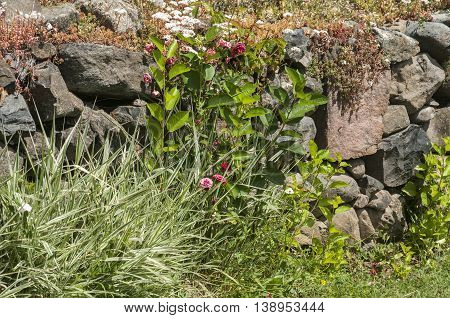 Low stone fence of rural yard overgrown with summer flowers and plants
