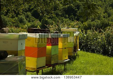 Monastery apiary with a lot of bees, sunny day in the field, good day to produce healthy natural honey.