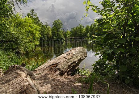 Pond in the park and the log in the foreground