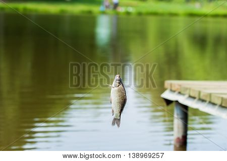 Fishing in lake, crucian carp fish on the fishing rod fisherman on the shore, concept of a rural getaway and fishing