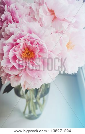 Floral wallpaper, background from flower petals. Trend colors pink and blue. Beauty pink peony, peonies, roses flowers. Bloom love concept. Card, text place, copy space.