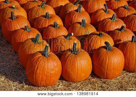 pumpkins arranged on the hay in autumn