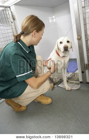 Veterinary Nurse Checking Sick Animals In Pens