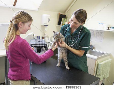 Junge Mädchen, die Katze zu bringen, zur Prüfung von Vet