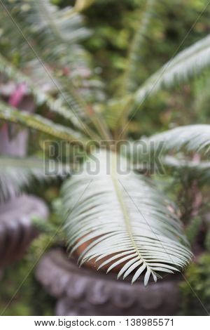 Green leaves in home garden, stock photo