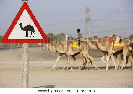 Beware Of Camel Sign In Dubai