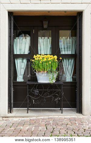 daffodil flowerpot in full bloom in front of a window in Italy.