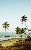 Постер, плакат: Пальмы на тропический залив