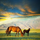 stock photo of horse-breeding  - Horses - JPG