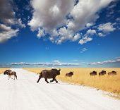 Постер, плакат: Rhino и антилопы Gny в парке Этоша