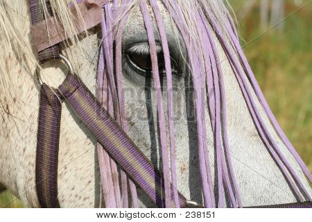 Gambler The Horse