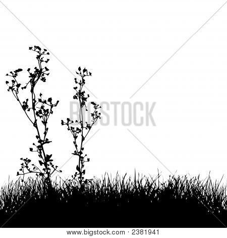 Grass & Plants Silhouette Background